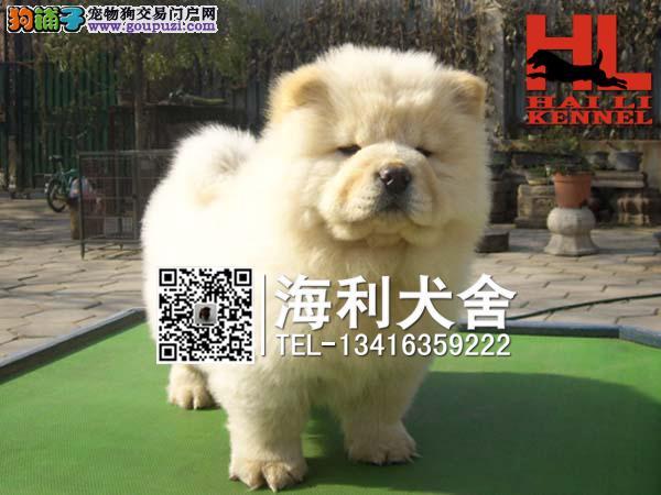 高品质松狮幼犬 毛量爆好 纯种肉嘴松狮幼犬