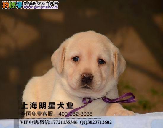 上海明星犬业拉布拉多保证纯种健康签订协议