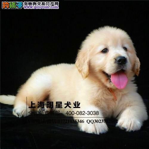 国内最大明星犬业 金毛签订协议保证纯种健康