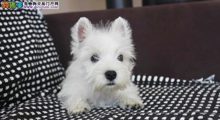 武汉那里有宠物店武汉那里买西高地有保障