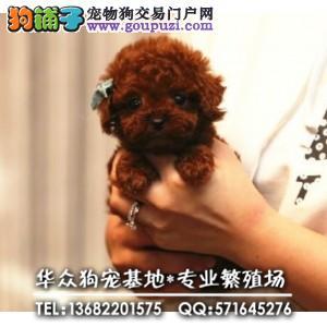深圳哪里买贵宾犬、健康终身保障、签协议送狗用品