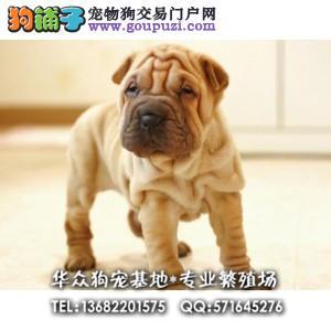 华众狗场直售沙皮狗 适应能力强 血统纯正 健康有保障