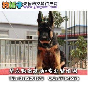 深圳哪里买狼狗有保障 首选华众狗场 购买可签订协议
