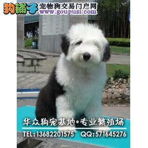 广州哪里买古牧最好 赛级品质 签协议有保障,可看父母