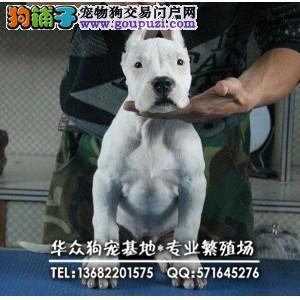 深圳哪里买杜高犬 健康保证 信誉保证 诚信保证