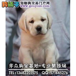 深圳哪里买拉多有保障 证书芯片齐全 可签订购犬协议
