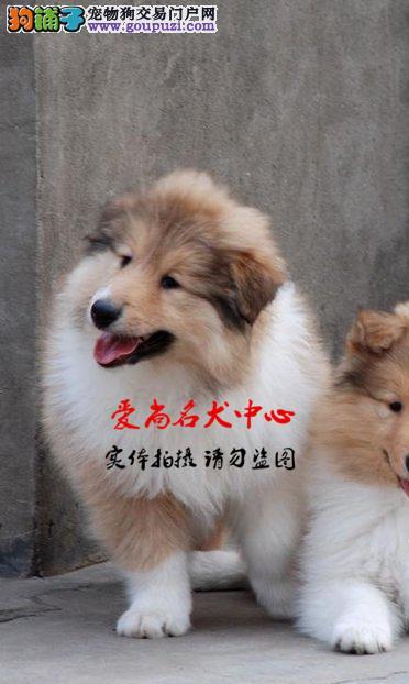 北京最大的喜乐蒂基地 完美售后 质量三包 可送货上门