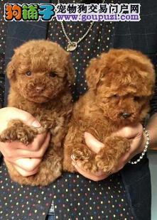 海南海口哪里有卖狗的地方