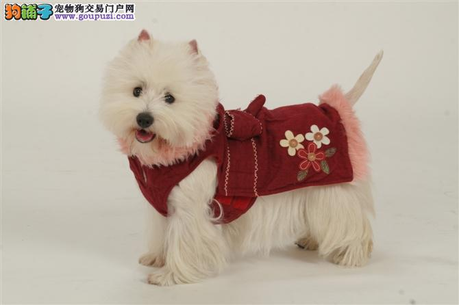 出售重庆西高地专业缔造完美品质可签合同刷卡