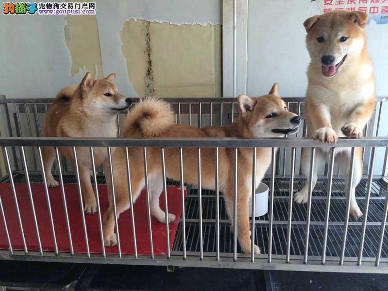 广州顺心犬业萌宠系列 中美合作犬业宠物狗