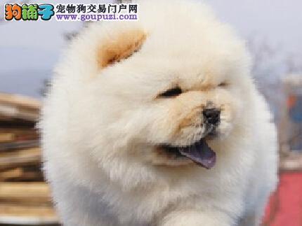 大头大肉嘴巴 白色黑色黄色都有 锦州急售 憨厚 毛茸茸