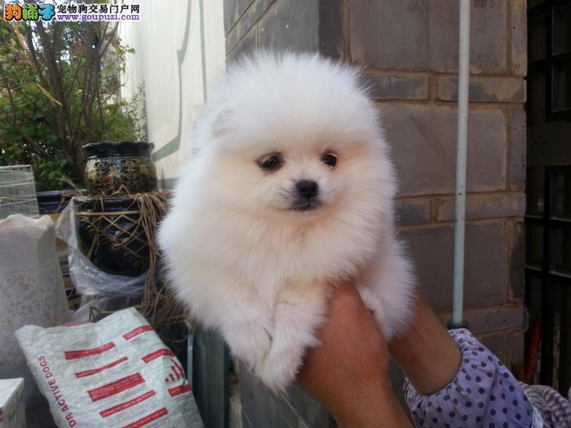曲靖哪里卖宠物犬 云南哪里卖宠物狗