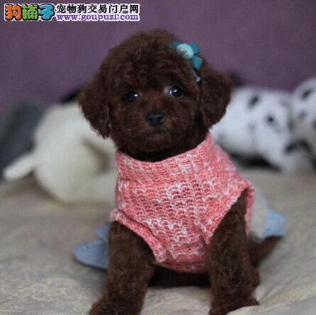 出售世界名犬中国神犬正宗藏獒犬