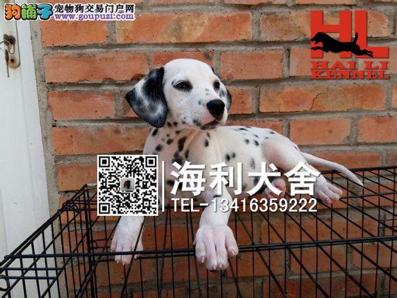 南宁哪里有卖斑点狗 南宁纯种大麦町犬多少钱