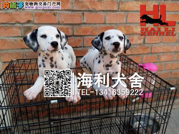 桂林哪里有卖斑点狗 桂林纯种斑点狗多少钱一只