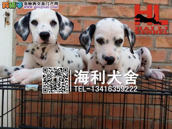 北海哪里有卖斑点狗 北海纯种斑点狗多少钱一只