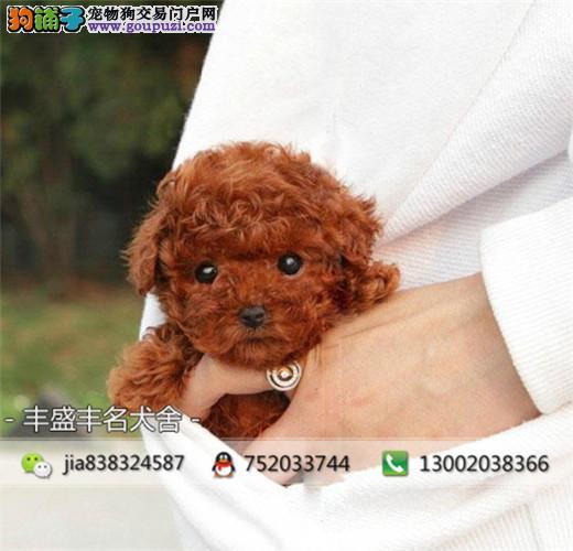出售颜色齐全玩具贵宾幼犬,疫苗已做完,签保售后