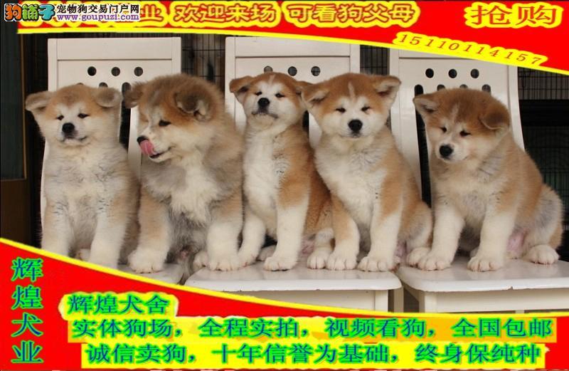 品质健康有保障  签订安全购犬合同  纯种秋田犬
