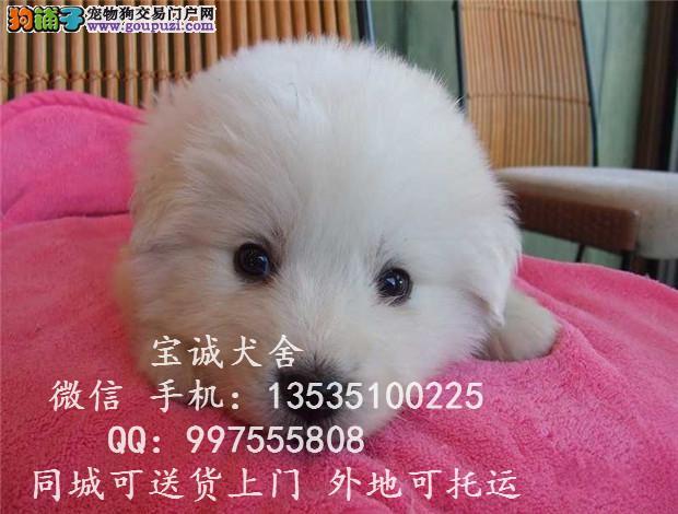 贵州大白熊多少钱一只 贵州大白熊价格多少