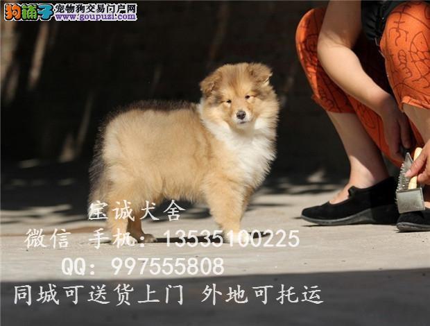 贵州哪里有卖苏牧 苏格兰牧羊犬多少钱一只