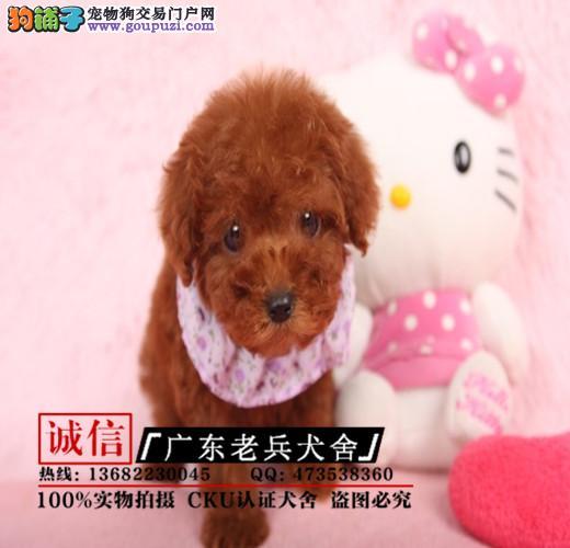 广东老兵犬舍 出售高品质贵宾幼犬 质量三包 可签协议