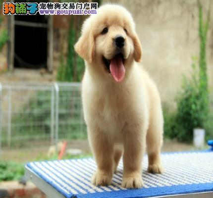 犬舍出售各类精品名犬 支持发货 质量三包 联系我哦