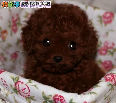 价钱都好说、如果你真的爱狗、想养条好狗、茶杯犬待售