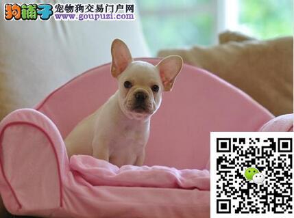 价钱都好说、如果你真的爱狗、想养条好狗、斗牛犬待售