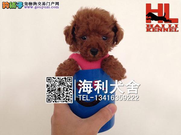 韩系顶级精品超小体玩具型泰迪熊 性价比最高 多窝选择