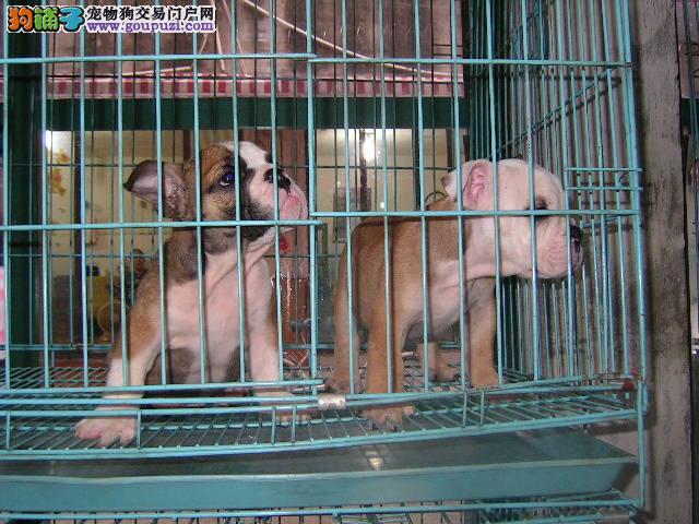 怒江哪里买狗最好 怒江哪里有养狗场