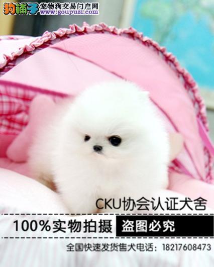 专业繁育博美犬 品质纯种保障签协议