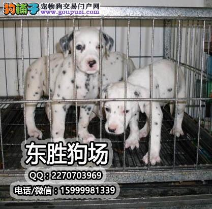 专业斑点繁殖狗场 十年经验 、狗狗终身质保、饲养指导