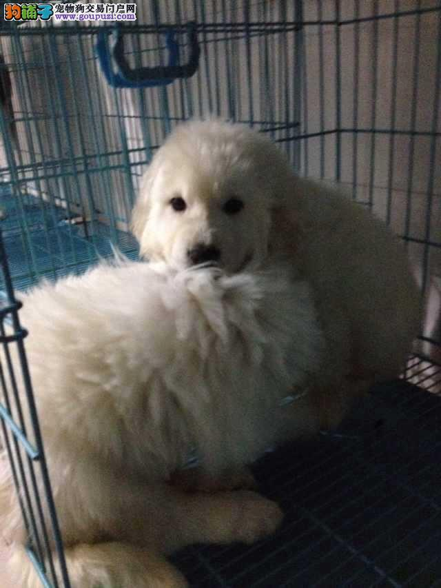 上海市嘉定区哪里有大白熊狗场