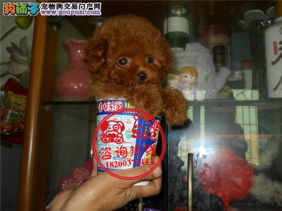 正规犬舍直销、世界名犬宠物狗、签协议、支持全国发货