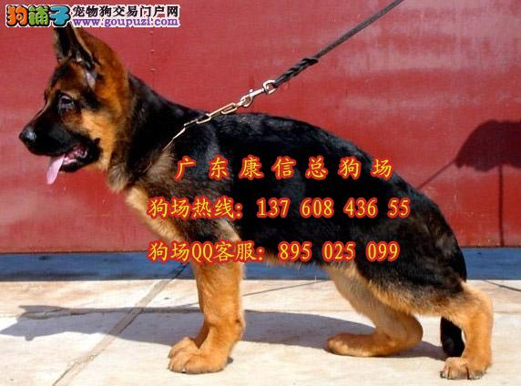 深圳正规狗场在哪里 深圳什么地方有卖德国牧羊犬