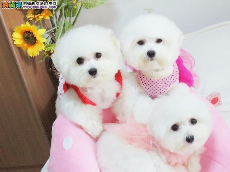 犬舍直销多个品种、大型犬、小型犬均有、支持全国发货