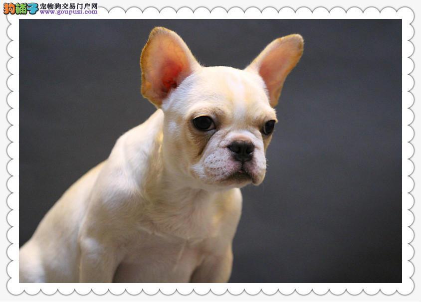 哪里有卖宠物狗,几十个品种等你挑选,有意向者请电联
