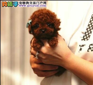 火爆出售大型犬、小型犬、中型犬三十多个品种