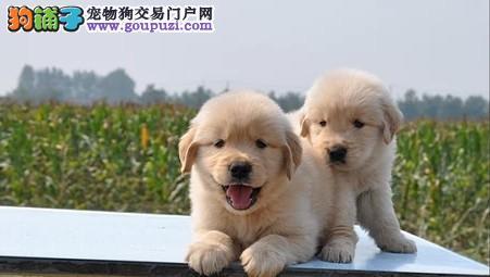 哪里有出售宠物狗狗的能狗养活纯种的幼犬