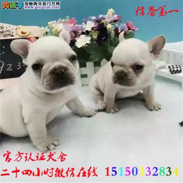 微信24小时在线服务15150332834 犬舍直销法牛