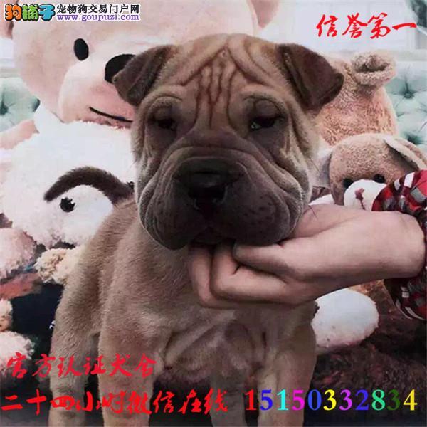 微信24小时在线服务15150332834 犬舍直销沙皮