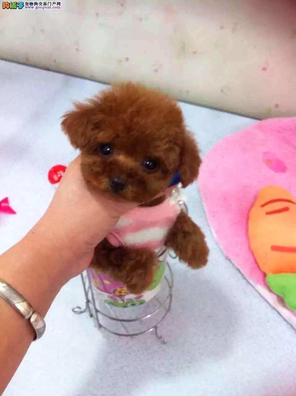 可爱萌萌哒泰迪熊可24小时视频看实物