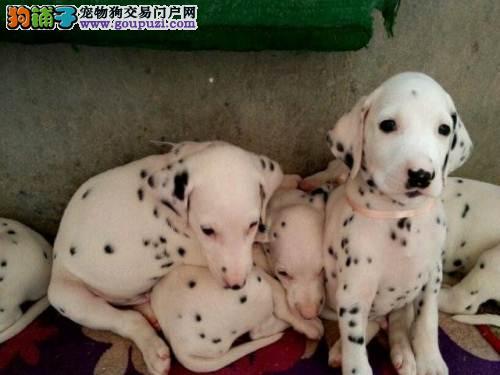 出售精品斑点一签协议一都是实物照片一杜绝星期狗