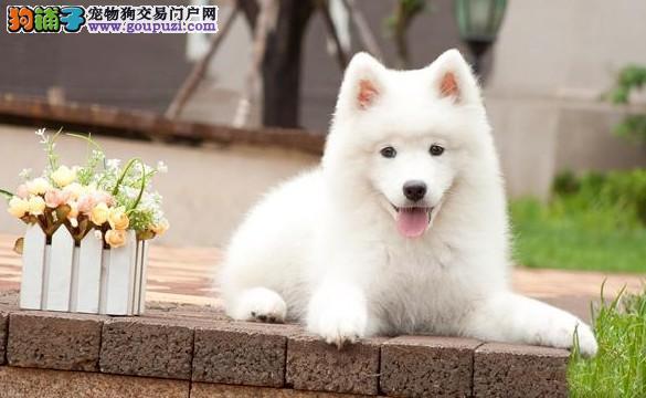 广州哪里有纯种宠物狗买/卖,纯种宠物狗多少钱