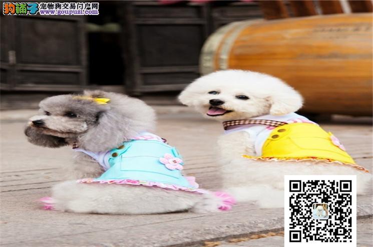 哈尔滨哪里卖的泰迪比较便宜 哈尔滨哪里能买到
