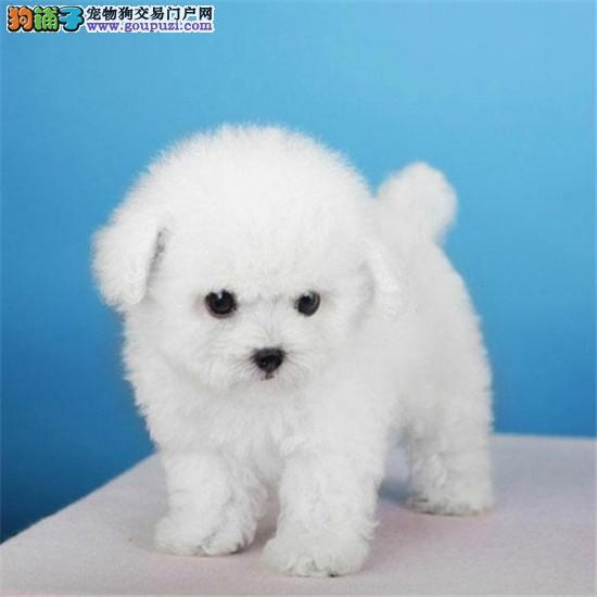 广州市唯一宠物协会指定的狗场 买放心犬首选广源狗场