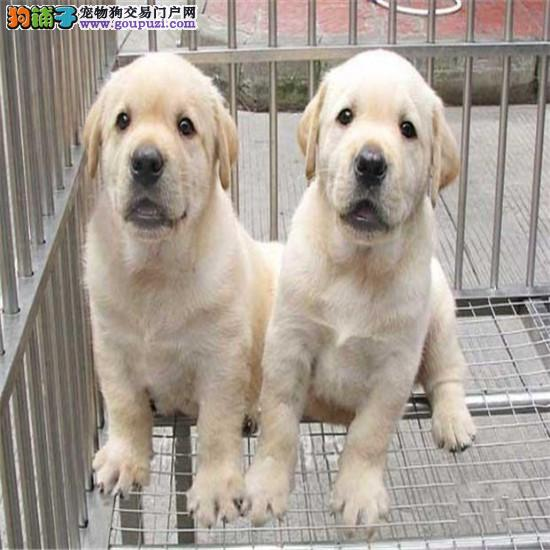 养殖场直销各种世界名犬一包健康纯种一可签保障协议