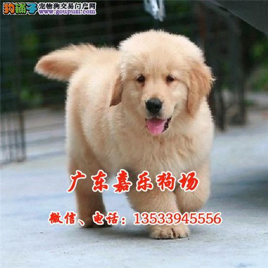 广东最大养狗基地 专业繁殖各种世界名犬 包纯种健康