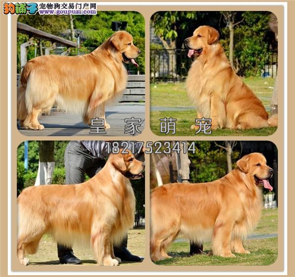 犬舍诚信出售 高品质纯种健康 各类宠物狗 可上门挑选