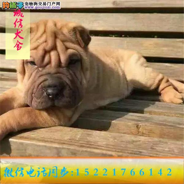 微信同步15221766142 24小时在线 专业出售 沙皮狗